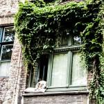 Bruges sleeping dog